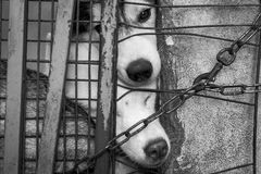 dog locked in the cage Royalty Free Stock Images