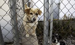 Dog locked in kennel stock photo