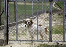 Dog locked in kennel. Abandoned animals and mistreated sad shelter cage pet face puppy homeless portrait sadness behind adoption fence lonely cute eyes looking stock photo