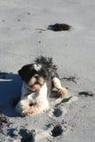 Dog on Lofoten's sand Stock Photo