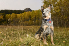 Dog look Stock Photography