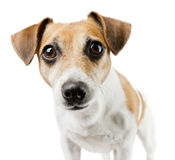 Dog look Stock Images