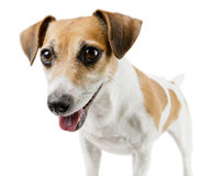 Dog look Royalty Free Stock Photography