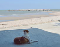 Dog look out to the sea at the beach Stock Image