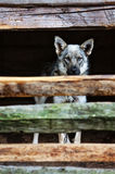 Dog look at outside behind a fence Stock Image