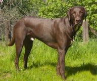 Free Dog Looking At The Camera Stock Image - 18998381