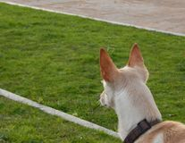 Dog looking attentively in the park stock image