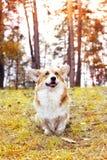Dog looking Royalty Free Stock Photos