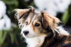 Dog looking away Royalty Free Stock Photo