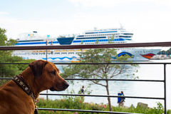 Dog looking from balkony to the ship Aida Mar Stock Photo