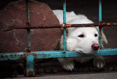 A dog looking through the bars of a fence Stock Image