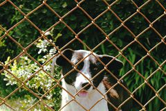 Dog looking from the cage. Wgite-black Dog looking from the cage , green blured backround Stock Photo
