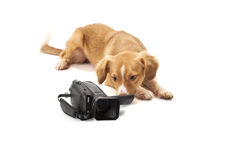 Dog looking at camcorder Royalty Free Stock Photo
