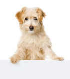Dog looking and camera. Royalty Free Stock Images