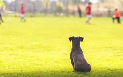 Dog looking at children Stock Photography