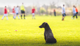 Dog looking at children Stock Photo