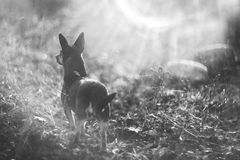 Dog looking Royalty Free Stock Images