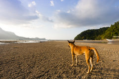 Dog looking distant place Stock Images