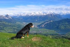 A dog looking down. From the mountain top Stock Photo