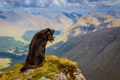 Dog looking down at world, Ben Starav, Scottish Highlands Royalty Free Stock Photo