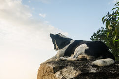 Dog looking at epic view from top mountain Stock Photos
