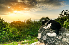 Dog looking at epic view from top mountain Stock Photography