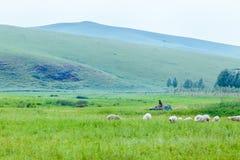 A dog looking at a grazing sheep.  Royalty Free Stock Photos