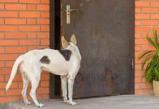 Dog looking into half-open door in master's house Stock Images