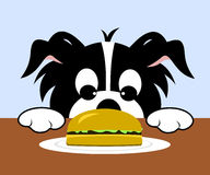 Dog Looking At Hamburger. Cartoon dog with paws on table looking at hamburger on plate royalty free illustration