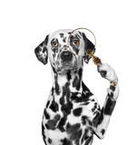 Dog looking through a magnifying glass loup. Dog looking through magnifying glass loup stock photos
