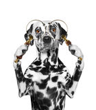 Dog looking through a magnifying glass loup. Dog looking through magnifying glass loup royalty free stock photography