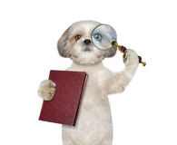 Dog looking through magnifying glass magnifier and going to read Stock Image