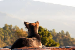The Dog looking for mountain view and  summer morning with light Stock Image