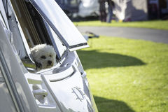 Dog Looking out Caravan Window Royalty Free Stock Photography