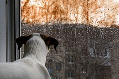 Free Dog Looking Out The Window In The Rain Royalty Free Stock Images - 119700629