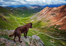 Dog looking over Colorado Mountain Stock Images