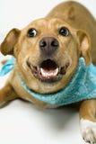 Dog looking playful. Stock Photos