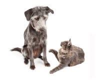 Dog Looking At Playful Cat Stock Photo