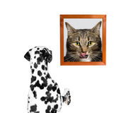 Dog looking at the portrait of the cat. Isolate Royalty Free Stock Images