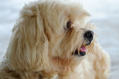 The dog is looking. The pretty dog is looking to something royalty free stock photos