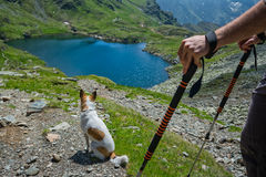 Dog looking at the scenery Royalty Free Stock Photo