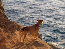 Dog looking at sea Royalty Free Stock Photo