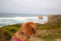 Dog looking at sea Royalty Free Stock Photos