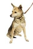 Dog looking sideways Royalty Free Stock Image