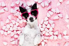 Dog love rose valentines Royalty Free Stock Images