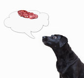 Dog looking to the thought bubble with sausage Stock Photo