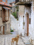 Dog looking up balcony. A dog standing in front of a typical Greek house and looking up to a balcony royalty free stock photos