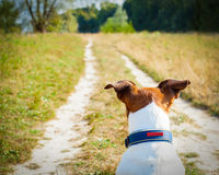 Dog  looking and watching Royalty Free Stock Images