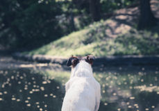 Dog looking on water, relaxing and meditating at pond beach Royalty Free Stock Photography
