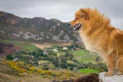 Dog on a lookout Stock Photography
